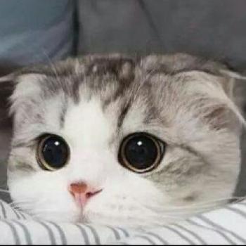 인생부질없다 고양이가 전부다 시부레