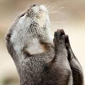 기도 메타